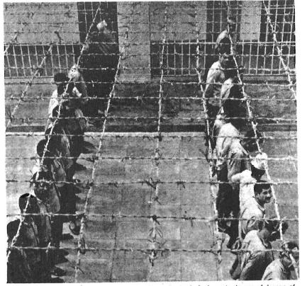 Arab Political Prisoners