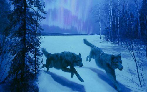 the-hunt-northern-lights-5603-1680x1050