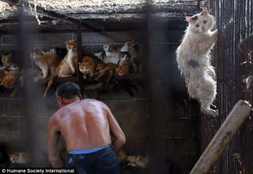 Cats Terrified by Chinese Torturers