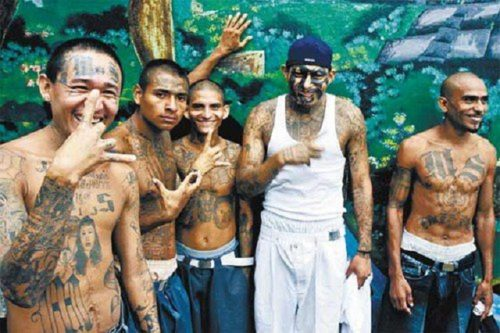 ms13gangmembers