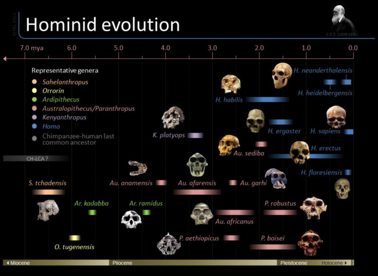 timeline-of-hominid-evolution_517f2065cdb2b_w1500