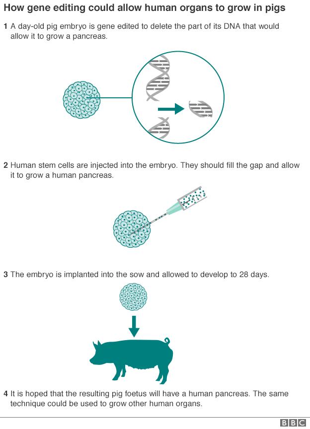 Nature Human Embryo Gene Editing