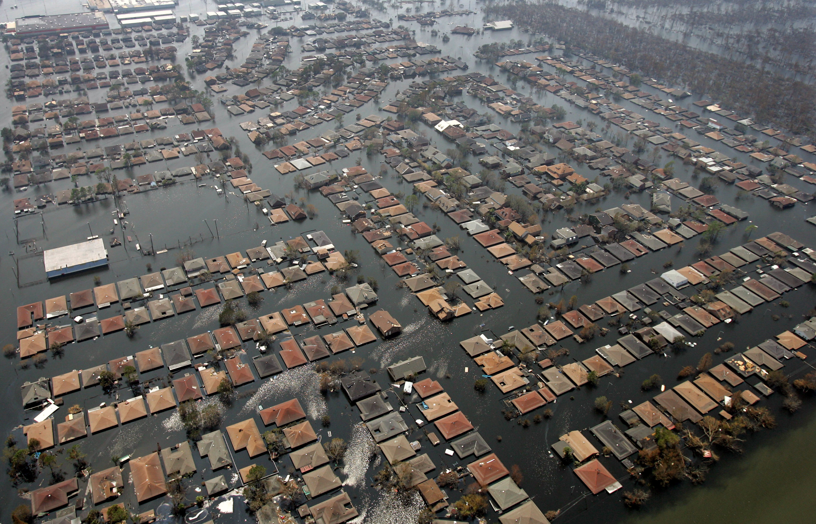 race hurricane katrina and the aftermath essay